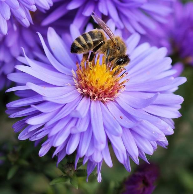 Bagaimana Proses Pembuatan Madu Oleh Lebah ?