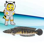 albumin ikan gabus
